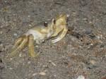 Not too crabby
