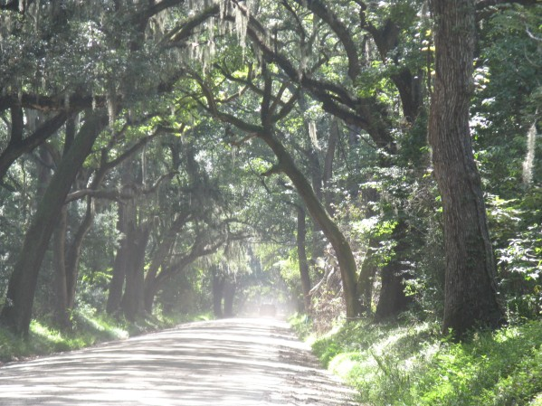 Botany Bay Road, Edisto
